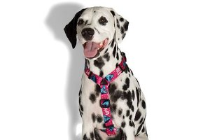 Peitoral para cachorros H Uni