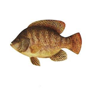 Peixe Corte Especial