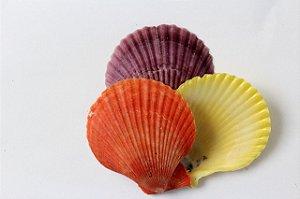 pecten nobilis colored unpair 5 cm - 750gr