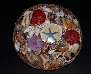 shell pack w/ flat starfish 30 cm  - unid