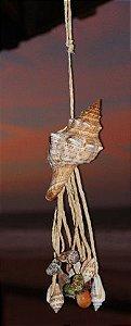 fasciolaria w/ small shells lock - unid