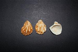 pezinho (ostrea equestris) - 1kg