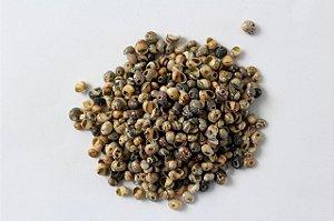 buso da lama (neritina virginea) 1 kg
