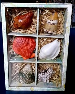box with mix shells 2x3 - unid