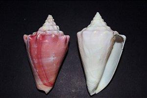 rosado 5 cm - unid