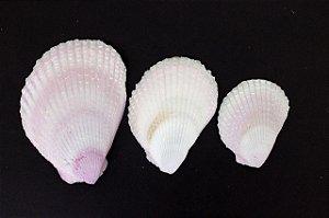 lima lima pair 5 cm up  - unid