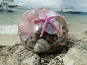 shell pack w/ lady finger starfish 10 cm - unid