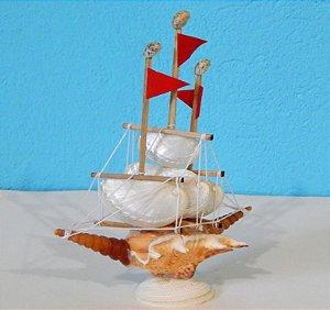 sail boat abalone 20 cm - unid