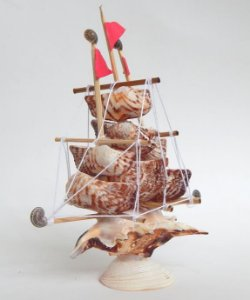sail boat lambis w/ arka shell 15 cm  - unid
