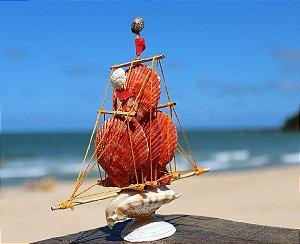 sail boat strombus aurisdianae 15 cm - unid
