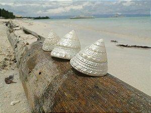 torong torong polished 5 cm - unid