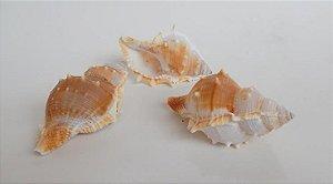 bursa espinosa 6 cm - unid