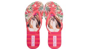 Chinelo Rafitthy Be Forever Shitzu Tropical Color