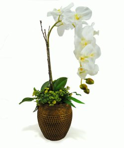 Orquídea Branca com Suculentas no Cachepot Rattan - 64cm