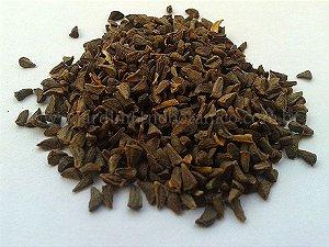 Arruda siria (Peganum harmala) - Sementes