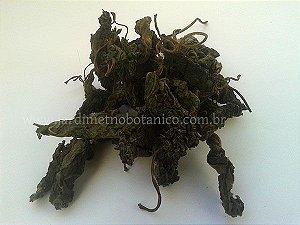 Sálvia Guaranitica - 10 gramas de Folhagem