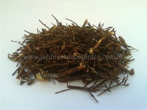 Hipérico (Hypericum perforatum) - Folhagem