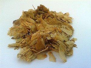 Lúpulo (Humulus lupulus) - Flores