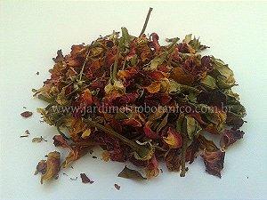 Rosa-rubra (Rosa gallica) - Flores