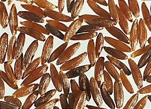 Artemísia (Artemisia vulgaris) - 25 sementes para cultivo