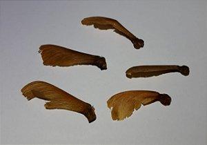 Cipó Jagube/Mariri var. Ourinhos (Banisteriopsis caapi) - 5 Sementes para cultivo