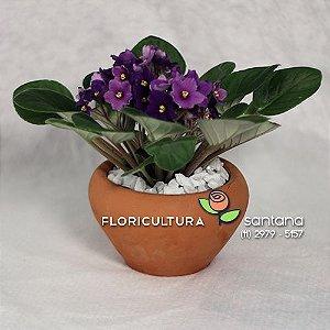 Violeta Especial