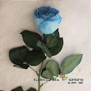 Rosa Azul Avulsa