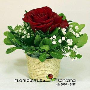 Amável Rosa