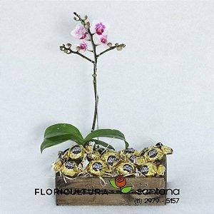 Orquídea Phalænopsis com Bombons