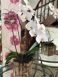 Orquídea Branca cachepô de madeira
