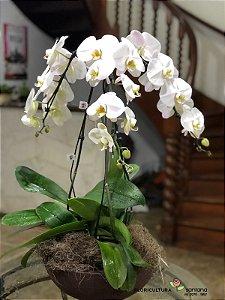 Vaso com 3 Orquídeas