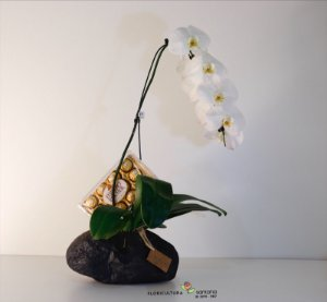 Orquídea Cascata Vaso Pedra Decorativo