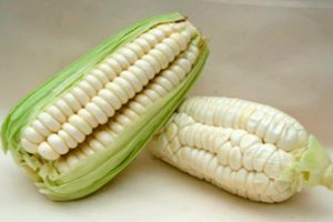 Milho peruano / Choclo Fresco - unidade