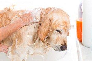 Shampoo Para Lavar Cachorro faz 15 litros