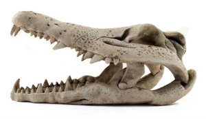 Toca e Esconderijo Para Répteis Cabeça de Crocodilo Pequena