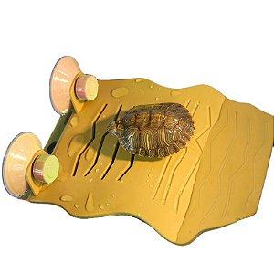 Deck Para Aquaterrário De Tartaruga Nomoy Pet G