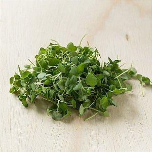 Brotos de Basílico Verde