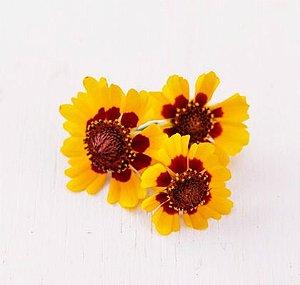 Flor Caliopsis