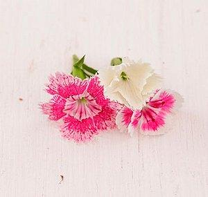 Flor Cravina
