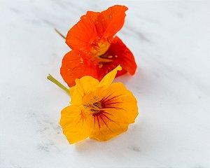 Flor Capuchinha