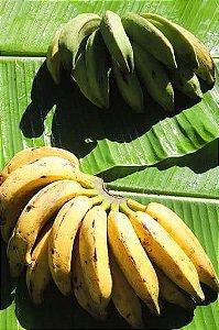 Banana Prata Verde Orgânica - 500g