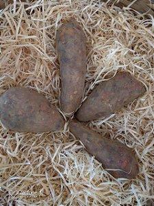 Batata Yacon Orgânica – 500g