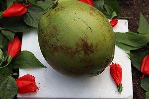 Coco Verde Orgânico – Unidade
