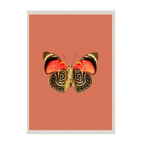 Quadro borboleta fundo terra cota
