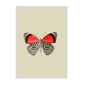 Quadro borboleta fundo off white