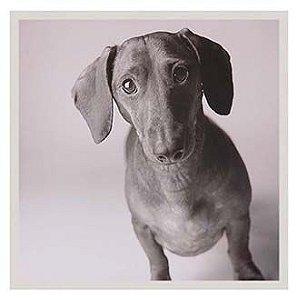 Quadro cachorro Basset