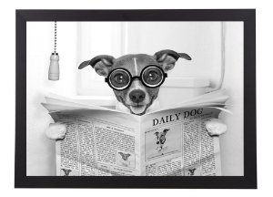 Quadro cachorro com jornal