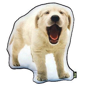 Almofada Coleção Cute Dogs - Golden Retriever