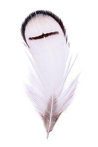 Pena Preto e Branco Faisão - Coleção Pena