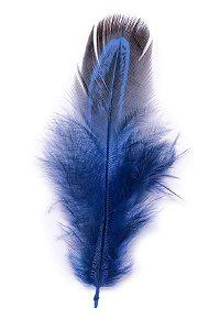 Pena Azul Marinho Faisão - Coleção Pena
